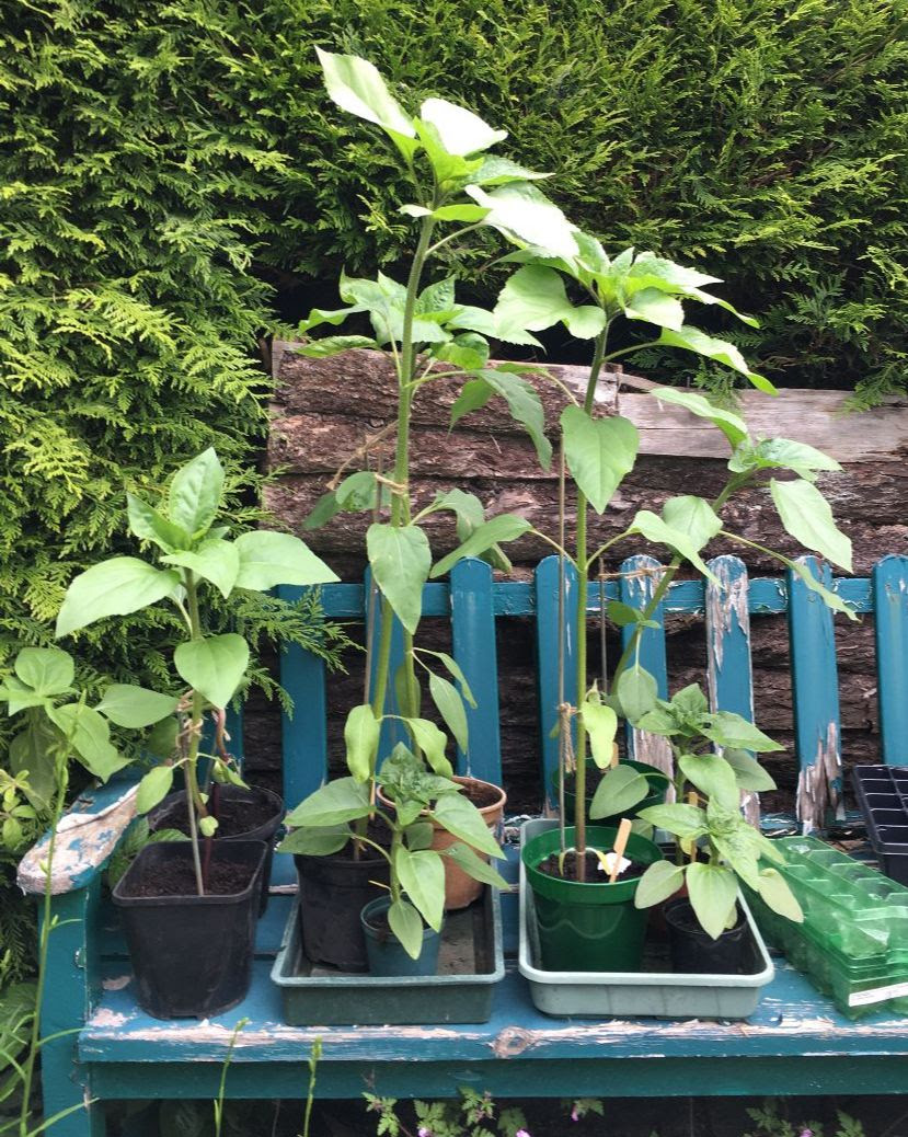 DotW, Wine Education, Sunflower Update, New Gin, New Ins and Car's the Star
