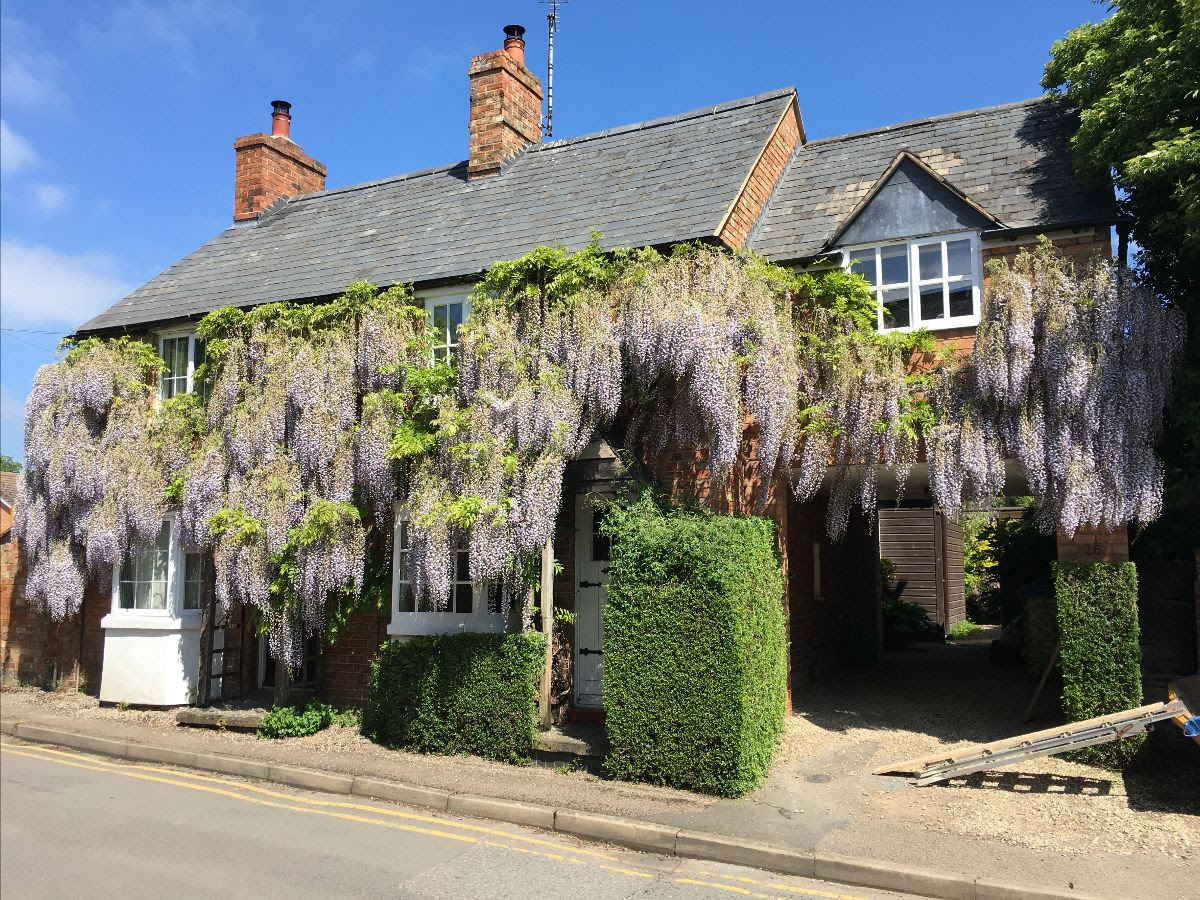 Wisteria, DotW, Capion, Labels, Hot Weather Wines and Car's the Star